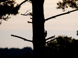 Click to view Woodpecker at Arne