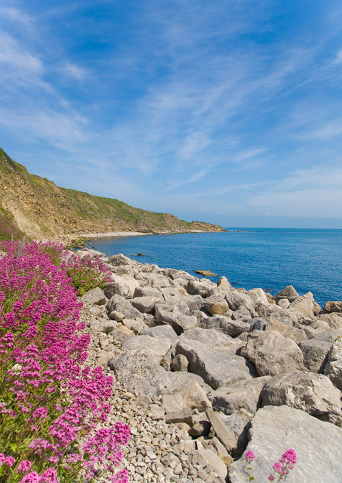 Flowers in Durlston Bay