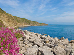 Click to view Flowers in Durlston Bay