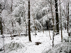 Click to view Snowy Woods