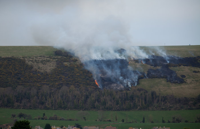 Burning Gorse on the Purbeck Hills