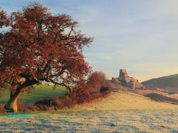 Click to view Corfe Autumn Tree