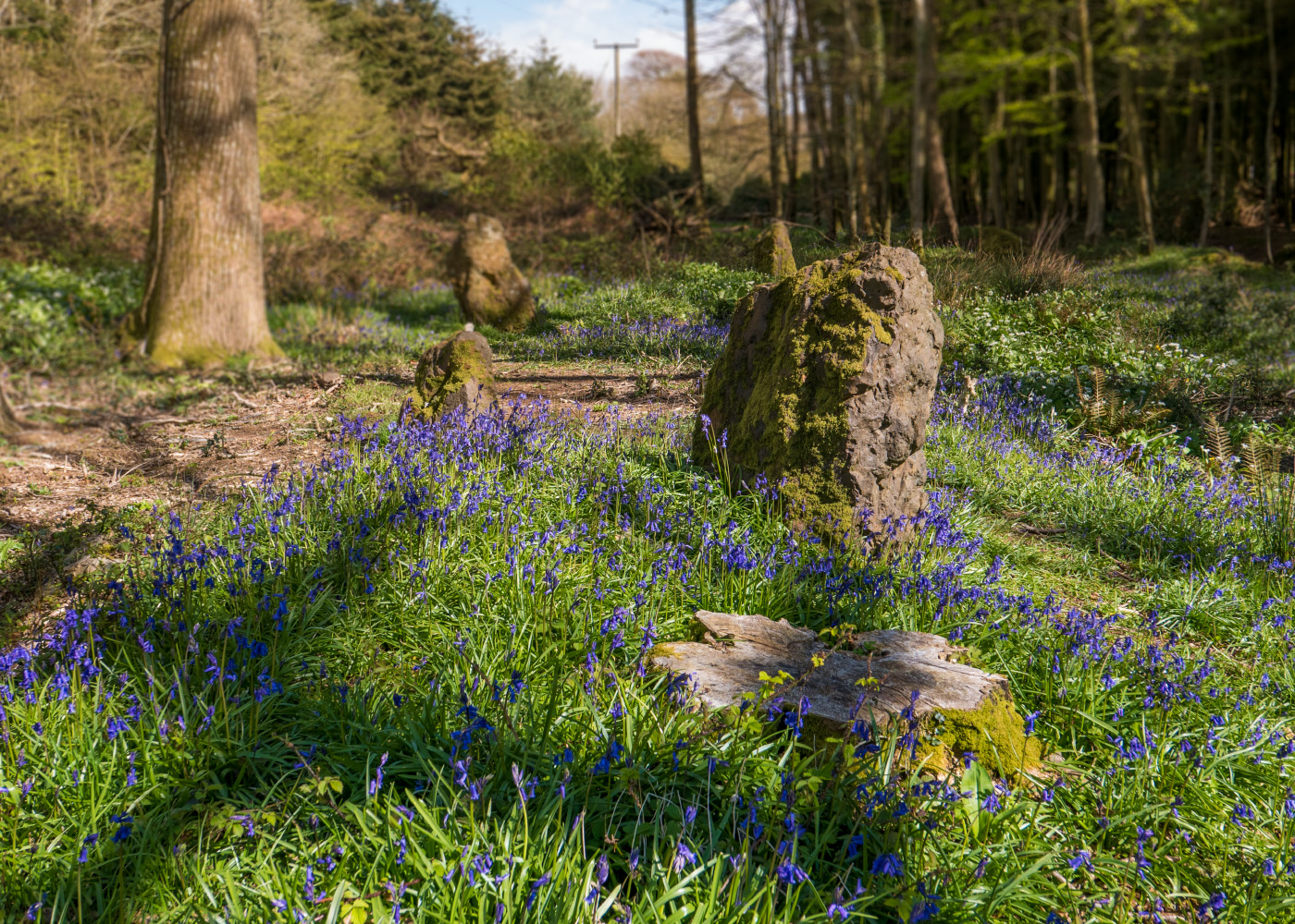 Bluebells and Standing Stones