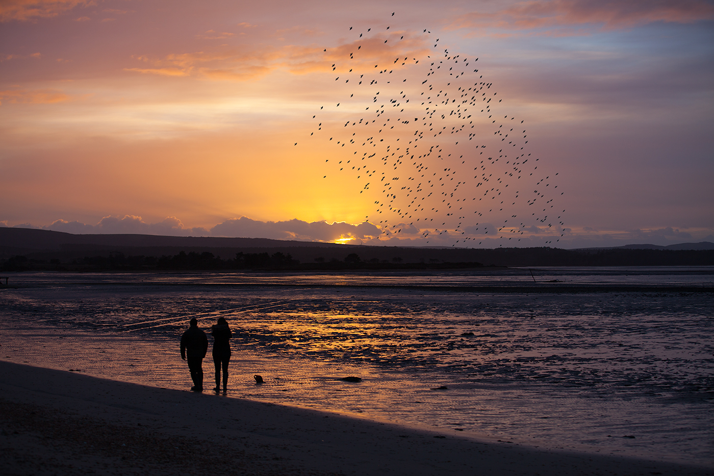 Murmurating starlings over Poole Harbour
