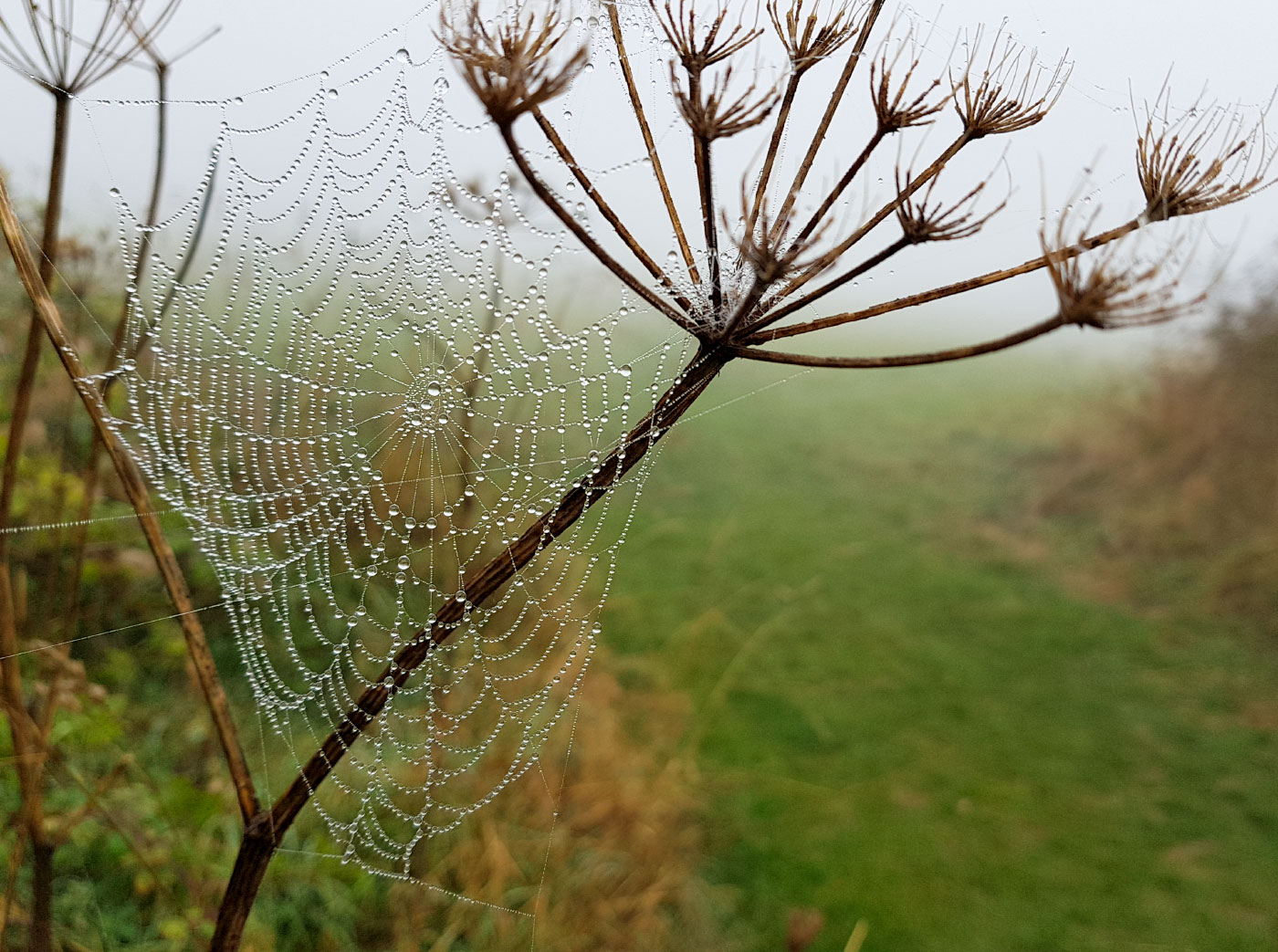 Fog in the web
