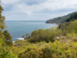 Click to view Durlston Bay in the Spring