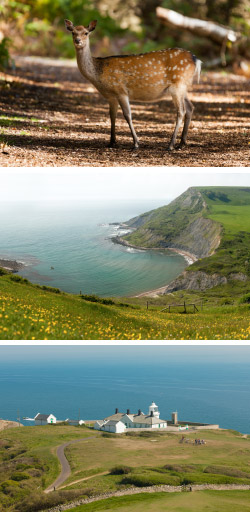 Purbeck Countryside and Wildlife